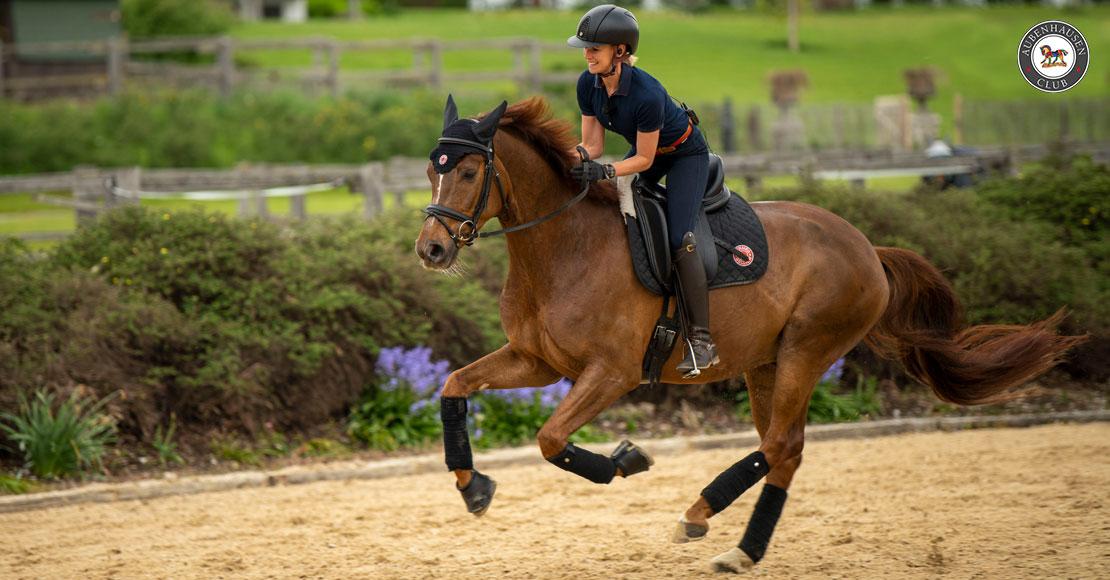 Training mit stürmischen oder phlegmatischen Pferden